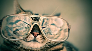 funnycat