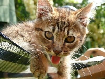 hot weather cat 1